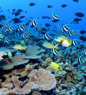 Reeffish-300