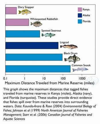 A little bit about Marine Reserves...
